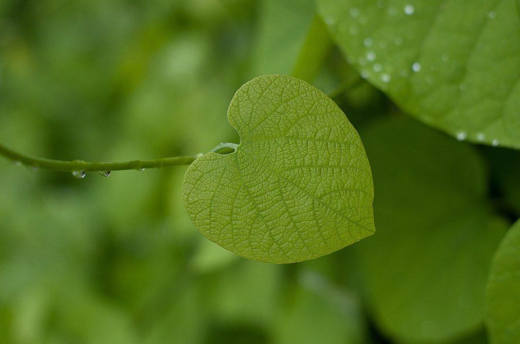 Aranżacje gazonowe – czy można je uznać za ciekawy pomysł na aranżację ogrodu?